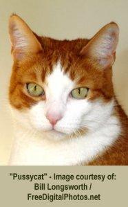 Pic #1C - cat