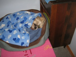 Tilly sleeps to the sound of music.  Photo credit:  Sandra Bell Kirchman.