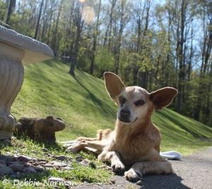 My hero dog Coco.  Photo credit:  Debbie Norman