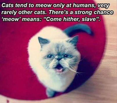 Dogs have owners and friends; cats have staff.  Apparently, some cats have slaves.  (Photo credit: