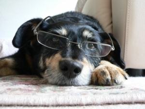 Has your pet recently asked you questions you couldn't answer?  (Photo credit: James Barker | FreeDigitalPhotos.net)