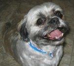 Happy dog Oreo(Photo Credit: Sandra Bell Kirchman)