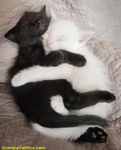 Yet, when the two of them curled up against each other for the night, they looked like an adorable yin yang.   Photo Credit: © grumpycatpics.com