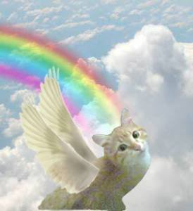Pic#53-AngelCat